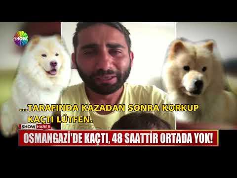 Kaybolan köpeği için ağladı