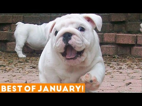 IMPOSSIBLE NOT TO LAUGH - The funniest DOG & PUPPY videos!