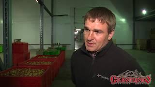 2017 год. Крымские яблоки для детей Ленинградской области