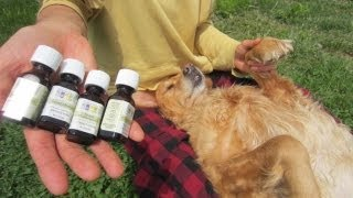 Natural Flea & Tick Repellent for Dogs # 2