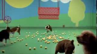 Dog Goldberg Machine Para Purina Beneful. Publicidad Simple, Creativa Y Muy Divertida.