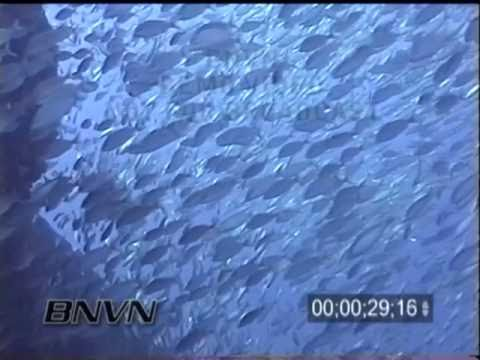 11/10/2001Gulf of Mexico Bayronto Wreck and Schooling Fish Video