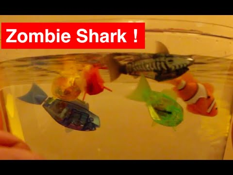 Hexbug Aquabot Zombie Shark - Robotic Fish Battle at Halloween - RoboFish & AquaBot 1s & 2.0