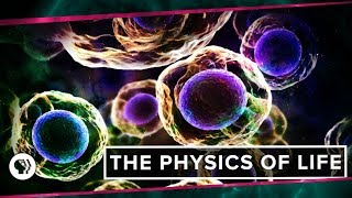 The Physics of Life (ft. It's Okay to be Smart & PBS Eons!) | Space Time