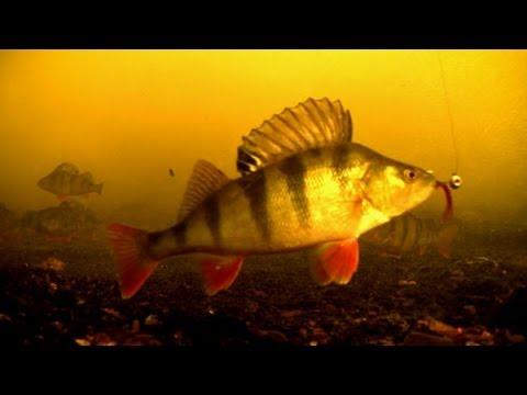 атом рыбалка окунь