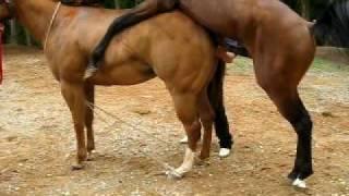 HORSES DO IT TAKE 2