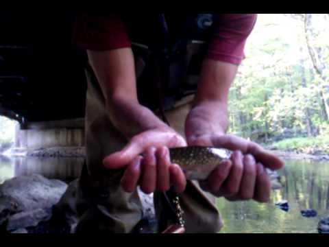 Wild Brook Trout Fishing New Hampshire