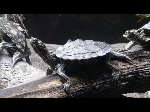 Turtle Care For Beginners: The Basic Enclosure How To Save Money And ...