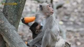 A young Dodoya mother fed bananas with a baby was feeding her first child Dodana
