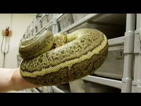 Snake Bytes TV - 