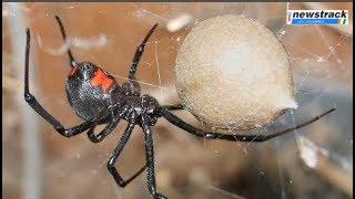 Raining Spiders in Brazil Sky | जब आसमान से होने लगी मकड़ों की बारिश, हैरान कर देगा VIDEO