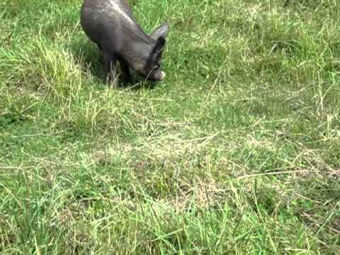 Big Boar Lodge - Homer NY - 8/2/10
