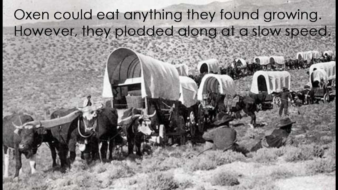 Covered Wagons Of The Oregon Trail Youtube