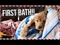 PUPPY'S FIRST BATH TIME!! | Vlogmas Day 16 MP3