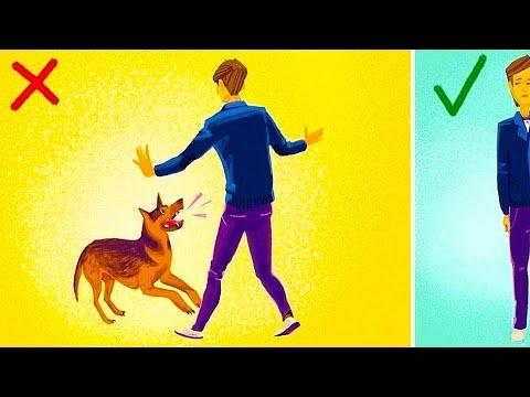 ЧТО Делать Если на ТЕБЯ нападает собака? Это нужно знать!