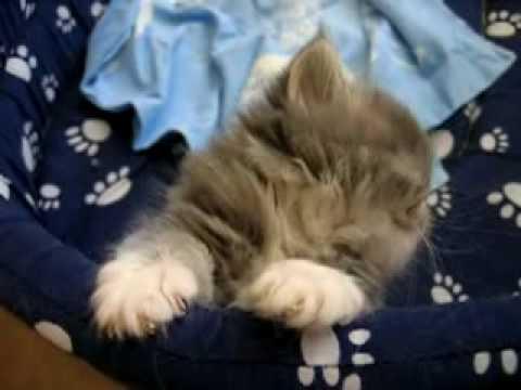 意識がだんだん遠のいていく・・・お疲れな子猫