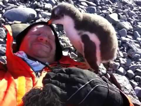 Baby Penguin Meets Human For First Time