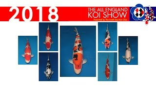 Major Winners from the 2018 All England Koi Show