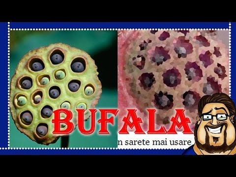 BUFALA D.O.C. | Infezioni da Shampoo