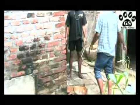 Liputan Garda Satwa - Jagal Anjing