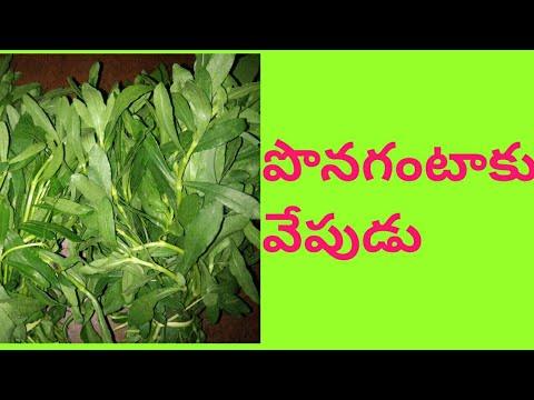 Ponagantaku fry in Telugu
