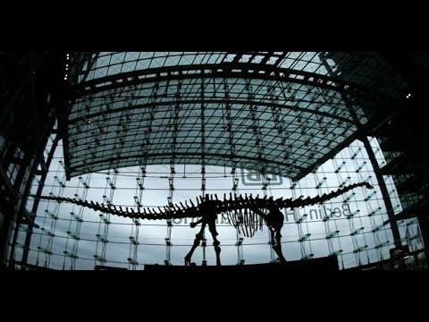 Rare Dinosaur Skeleton Goes Up for Sale