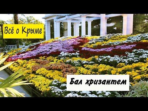 Бал хризантем. Никитский ботанический сад бал хризантем.