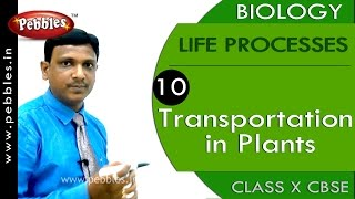 Transportation in Plants| Life Processes | Biology | CBSE Class 10 Science