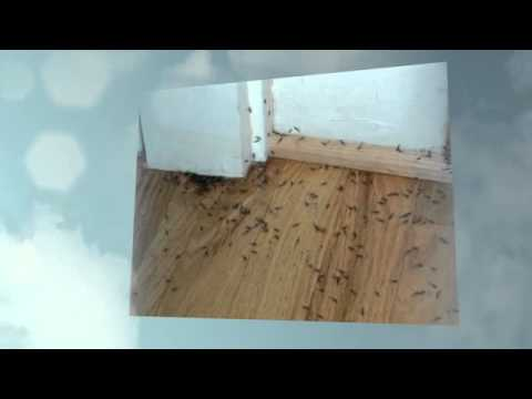 how to find out if you have termites