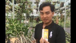 HoalanTV: Anh Nguyễn Ngọc Hà Chia Sẻ Toàn Bộ Về Phòng Và Trị Bệnh Cho Lan