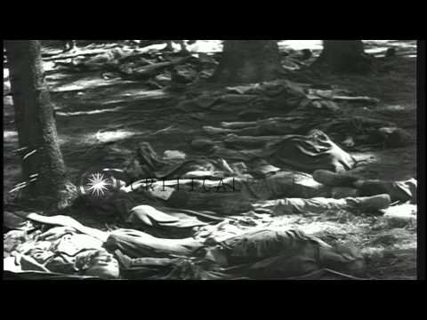 A soldier inspects dead bodies of victims of World War II in a wood in Germany. HD Stock Footage