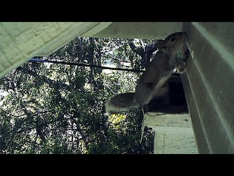Ladder Rescue for Young Squirrels