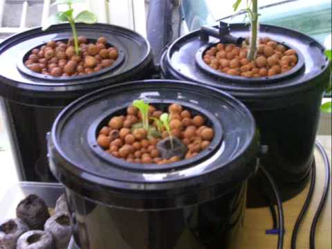 Aeroponic Hydroponics Bubbleponics Growing Pot Week 02