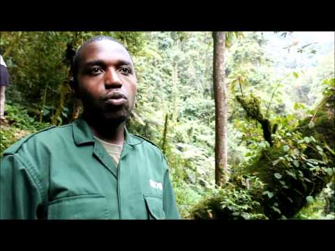 Nyungwe National Park, Rwanda: Tourism and Tourist Attractions (Interview with Kambogo Ildephonse)