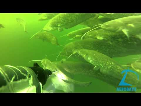 подводная рыбалка на днестре на сома видео