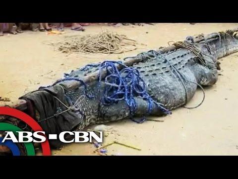 Giant croc 'Julio' blamed for fisherman's death