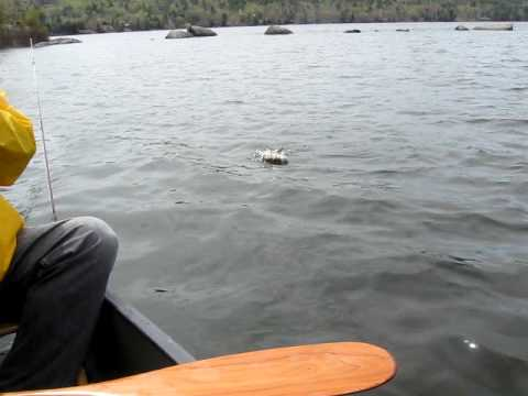 Fishing Eastern Chain Pickerel New Hampshire Lake