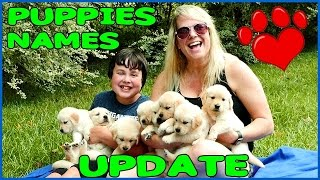 PUPPIES NAMES UPDATE!  Golden Retriever Pups with Cheryl and Brayden