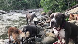 Sweetie going underwater for rocks in the river
