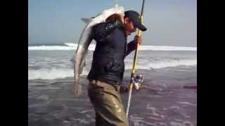 Pêche de courbine au sahara marocine