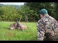 Schwarzwildjagd Bei Tageslicht 2.0  Besuch Von Huntingroom Germany 4K