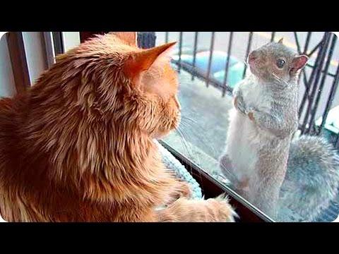 Приколы с Животными 2017 / Смешное Видео Про Животных / Funny Animals 2017