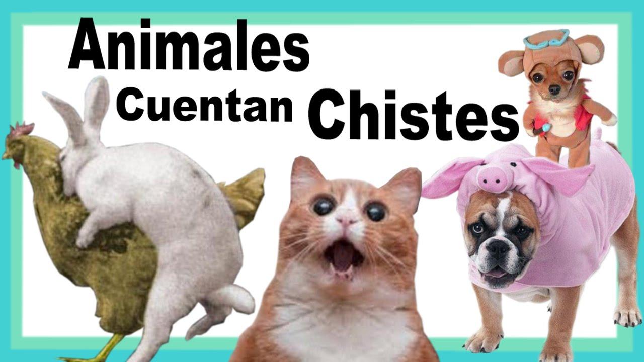 Video chistoso video gracioso animales que cuentan chistes youtube