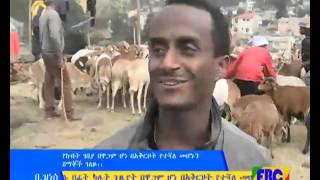 Ethiopian Business Eve news January 06, 2016