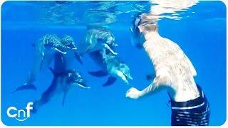 Dolphin Says Hi to Snorkeler | Dolphin Whisperer