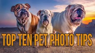 Dog Photography- Top Ten Tips to take better pet photographs.