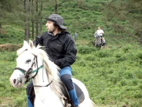 Bajada de los caballos salvajes de la motaña