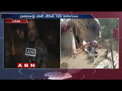 Herd of over 120 Elephants enter habilitated areas in Mayurbhanj, destroys livelihood | odisha