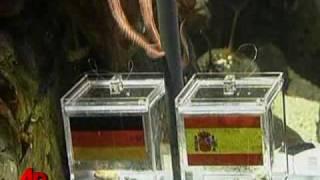 Thumb Oficial: El Pulpo Paul indica que España ganará a Alemania este Miércoles