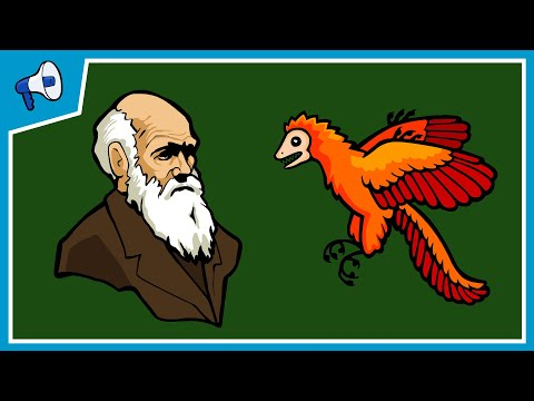 Myths and misconceptions about evolution - Alex Gendler